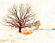 Winter Tree Print by Randy Steele