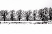 Winter Trees Photo Originals - Winter Treeline by Don Nieman