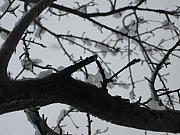 Linnea Tober - Winter Trees 2