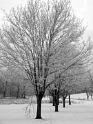 White Snow Acrylic Prints - Winter Trees Acrylic Print by David Bearden