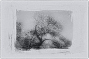 Tress Prints - Winter Trees Print by David Ridley