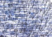 Bill Lang - Winter Trees in Shadows
