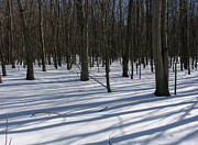 Winter Landscapes Digital Art Metal Prints - Winter Trees in snow with shadow lines Metal Print by Adam Long