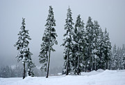 Marilyn Wilson - Winter Trees