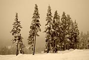 Marilyn Wilson - Winter Trees on Mt. Washington