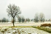 Bare Trees Photos - Winter trees by Silvia Ganora