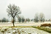 Silvia Ganora - Winter trees