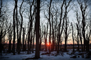 Sun Photo Originals - Winter Trees by Steve Gadomski