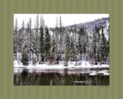 Montana Digital Art - Winter Trees by Susan Kinney