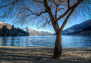 Willow Lake Posters - Winter Willow on Wakatipu Poster by Ian Rushton
