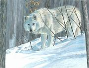 Winter Trees Drawings Posters - Winter Wolf Poster by Carla Kurt