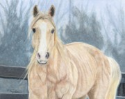 Horse Drawings - Winter Wonder by Nichole Taylor