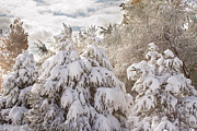 Stock Photo Art - Winter Wonderland by James Bo Insogna