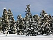 New England Winter Framed Prints - Winter Wonderland Framed Print by Juergen Roth