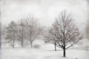 Blizzard Scenes Digital Art Prints - Winter Wonderland Print by Maria Aiello