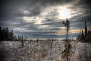 Winter Trees Photos - Winter Wonderland by Michel Filion