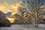 Winter Trees Photo Originals - Winter Wonderland by Terence Davis