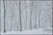 Snowstorm Art - Winter Woodland by Kristin Elmquist
