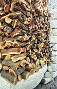 Cut Trees Posters - Winter woodpile Poster by Paul Cowan
