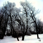 Aboriginal Art Digital Art - Winter woods by Dan Daulby
