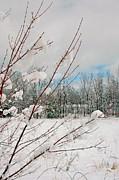 Winter Woods Print by Joann Vitali