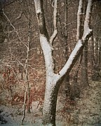 Painterly Photography Posters - Winter Woods Poster by Odd Jeppesen