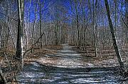 Winter Trees Photos - Winter Woods  by Wildwood  Artistry