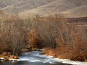 Yakima River Posters - Winter Yakima River with Hills and Orchard Poster by Carol Groenen