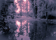 Oil Slick Posters - Winterland in the Swamp Poster by DigiArt Diaries by Vicky Browning