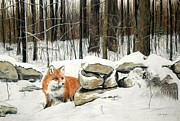 Fox Pastels Prints - Winters Flight Print by Pat Morris