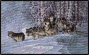 Wolf Photograph Mixed Media - Winters Lace by J McCombie