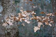 Rderder Prints - Winters Leaves Print by Roy Erickson