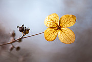 Winter Flower Photos - Winters Light by Steven Poulton