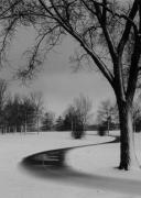 Winter Trees Photos - Winters Path by David  Hubbs