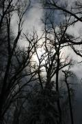 Winter Trees Photos - Winters Song  by Angie Wingerd