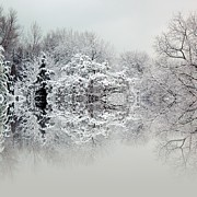 Winter Trees Photos - Winters tale by Sharon Lisa Clarke