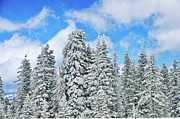 Snow Photo Framed Prints - Winterscape Framed Print by Jeff Kolker