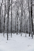 Wintry Photo Prints - Wintertime Print by Gabriela Insuratelu