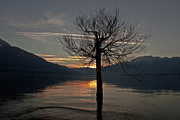 Sunset Light Photos - Wintertree In The Evening by Joana Kruse