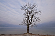 Winter Trees Photo Posters - Wintertree Poster by Joana Kruse