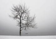Winter Travel Art - Wintertrees by Joana Kruse