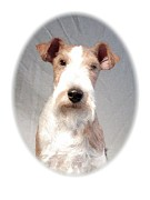 Fox Digital Art - Wire Fox Terrier 291 by Larry Matthews