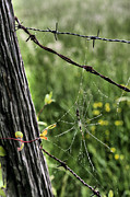 Barbed Wire Fences Photo Prints - Wired Print by JC Findley