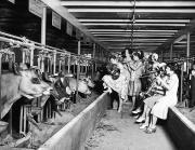 Wisconsin: Dairy Farm Print by Granger