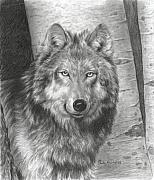 Wolf Drawings Framed Prints - Wise Eyes Framed Print by Carla Kurt