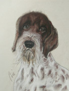 German Pointer Prints - Wisely Affable Print by Cori Solomon