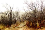 Amber Crago - Wispy Trees
