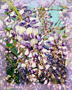 Fragrance Mixed Media Prints - Wispy Wisteria Print by Andee Photography