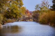 Flourtown Posters - Wissahickon Autumn Poster by Bill Cannon