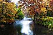 Autumn Trees Prints - Wissahickon Creek Morning Print by Bill Cannon